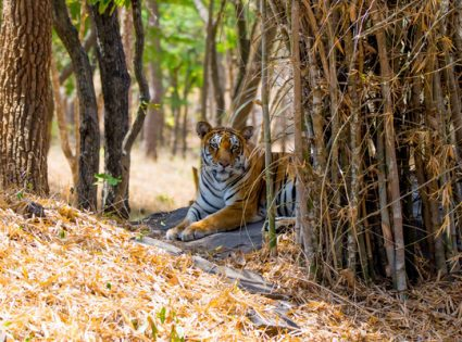 Bannerghatta National Park India