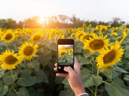 iphone camera challenge