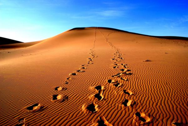The Diaries of a Jetsetter, The Mongolian Gobi Desert- Part 2
